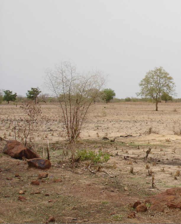 der unsachgem e anbau von baumwolle kann die desertifikation in westafrika beschleunigen. Black Bedroom Furniture Sets. Home Design Ideas